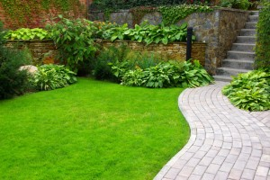 Get a new lawn or Raleigh lawn renovation by Evergreen!